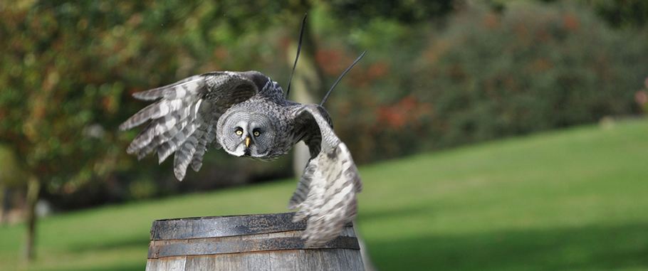 There is always the falconry event taking place... So bring the kids for an exciting day out.