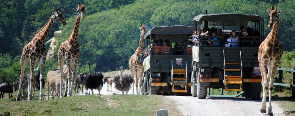 Make your visit to Howletts Wild Animal Park or Port Lympne Reserve even more special by booking an activity or experience day. Whether you prefer a relaxing safari with dining experiences or an adrenaline fuelled activity such as zorbing, there's something for everyone to enjoy. The wild just got wilder!
