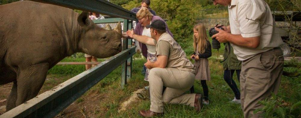 The Rhino Safari is a 2 hour adventure that provides you and your group a rare opportunity to come face to face with one of Africa's 'Big 5'...the black rhino. Meet this rare and endangered species up close and personal, learn more about the conservation efforts in place here at Port Lympne and with the ranger's approval, perhaps the opportunity to hand feed this magnificent beast! Price: £40 per person